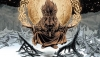 'The Autumnlands: Tooth & Claw Volume 1' - TPB Review